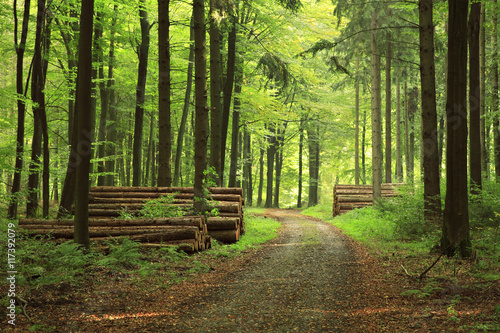 Garden Poster Forest Dirt Road through Forest, Piles of Lumber