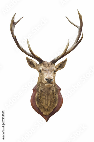 Tuinposter Hert Stuffed deer head.