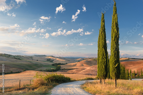 Fotografiet  Beautiful picturesque view of the road and cypress trees.