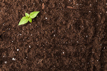 Seedling Green Plant Surface T...