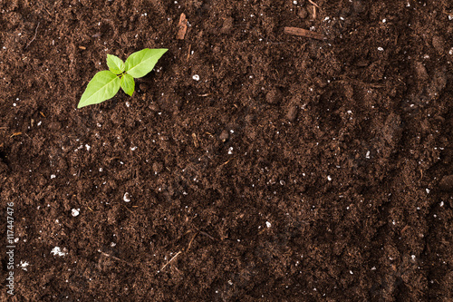 Fotografía  Seedling green plant surface top view textured background