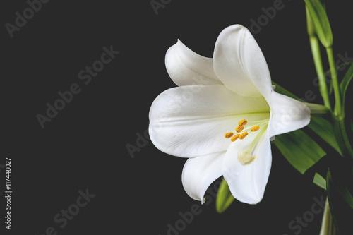 Fotografía Macro Easter Lily