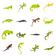 Flat Lizard Icons Set. Univers...