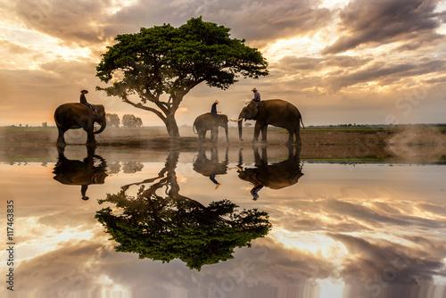 einzelne bedruckte Lamellen - Three elephants. (von sirisakboakaew)