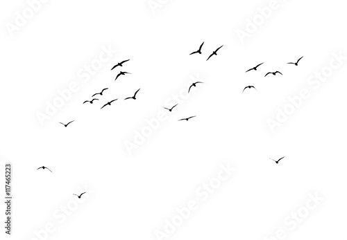 Poster de jardin Oiseau silhouette of a flock of birds on a white background