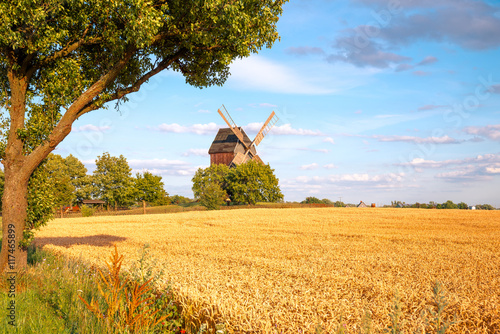 Aluminium Prints Mills Windmühle mit Feld, Baum und Himmel
