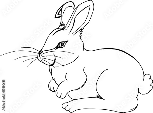 Cottontail Rabbit Illustration Hand Drawn Pencil Sketch Isolated On