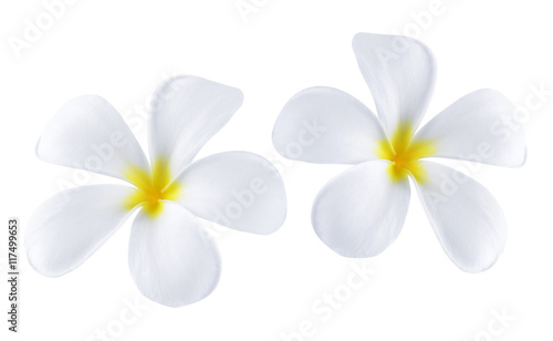 Photo Stands Plumeria Plumeria