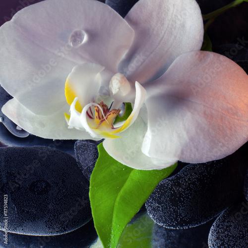 Pinturas sobre lienzo  Orchidea