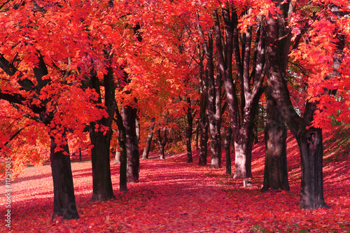 Poster de jardin Rouge traffic color autumn forest