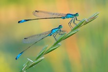 Dragonfly On A Colorful Background