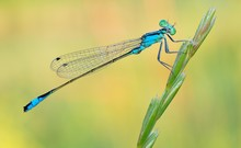 Dragonfly On A Colorful Backgr...