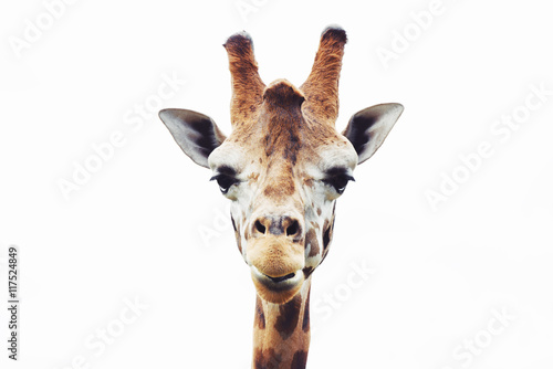 Spoed Foto op Canvas Giraffe Giraffe head close up isolated on white background