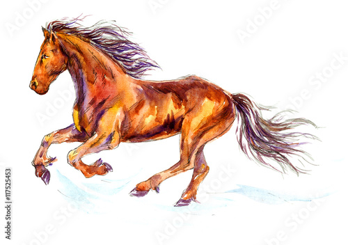 Fotografía  Hand painted Watercolor Illustration «Fast galloping horse»