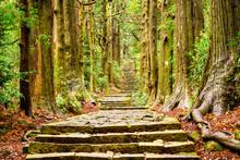 Sacred Trail In Japan