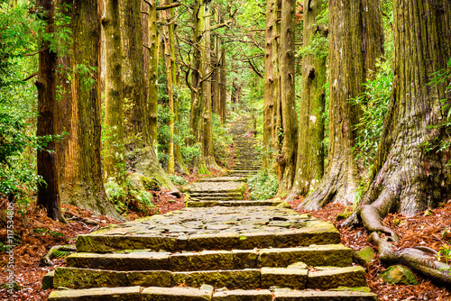 Spoed Foto op Canvas Weg in bos Sacred Trail in Japan