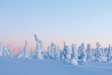 Winter Landscape At Sunrise In...