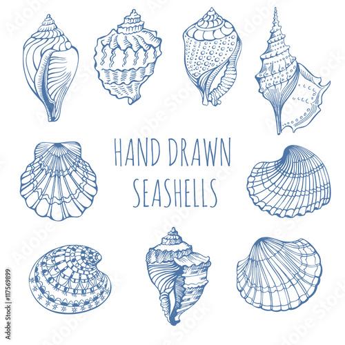 Carta da parati Seashells