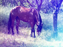 Grassing Horse In Misty Forest