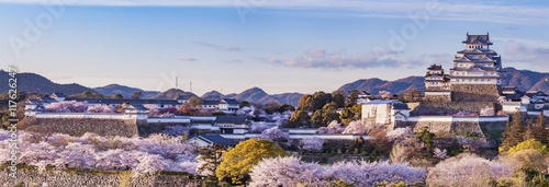 Poster Kasteel Japan Himeji castle with light up in sakura cherry blossom season