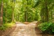Leinwandbild Motiv Wald Weg Richtung Entscheiden