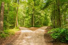 Wald Weg Richtung Entscheiden