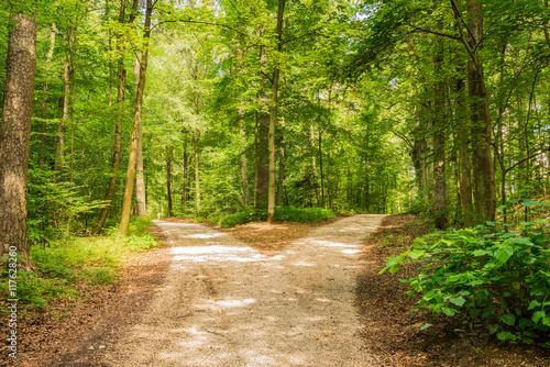 Foto op Canvas Weg in bos Wald Weg Richtung Entscheiden