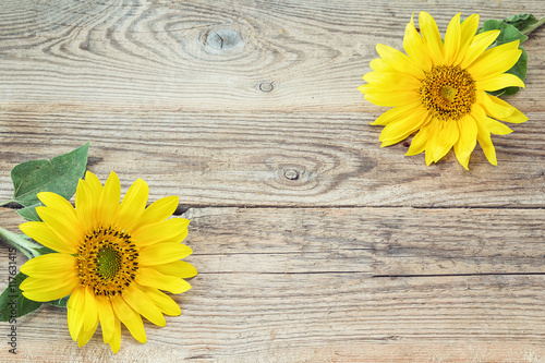 In de dag Zonnebloem Background with sunflowers on old wooden boards. Space for text
