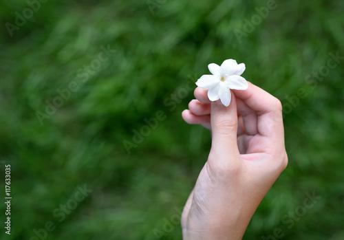 Asian Girl Hand Holding White Jasmine Flower This Flower Is Symbol