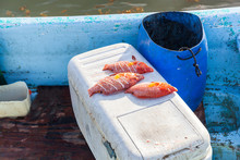 Catched Fish On Refrigerator A...