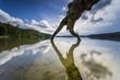 Leinwandbild Motiv Umgestürzte Bäume am Rande eines Sees mit Spiegelung der schönen Wolken im Wasser