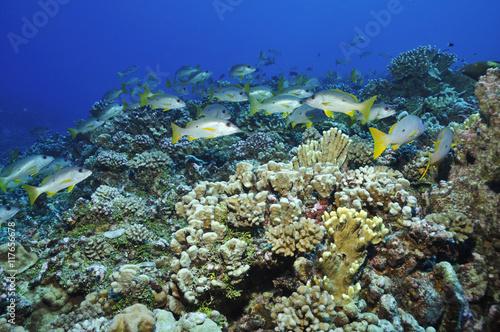Photo Stands Coral reefs Korallenriff in der Südsee