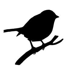 High Quality Original Silhouette Bird On Ash Branch