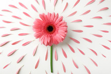 Beautiful Flower With Petals On White Background
