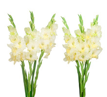 Bouquet With Yellow Gladiolus Isolated On White Background