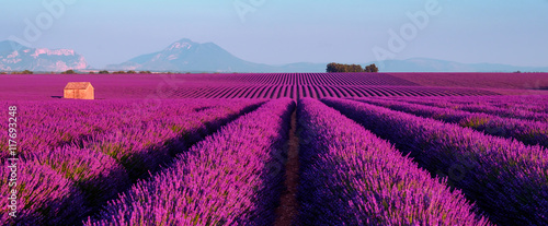 Poster Village Lavender field at sunset in Provence, France