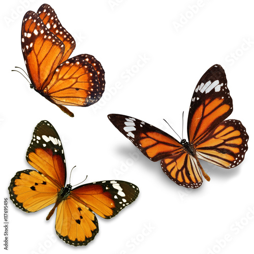 Papiers peints Papillon Three monarch butterfly