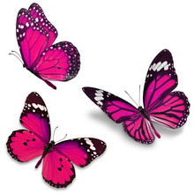 Three Pink Butterfly