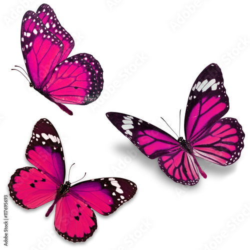 La pose en embrasure Papillon Three pink butterfly