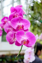 Beautiful Orchid Pink Purple A...