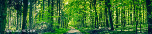 Foto auf Gartenposter Wald Green trees by a forest path