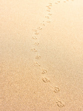 Sand With Bird Or Seagull Footprints. Beach Background.