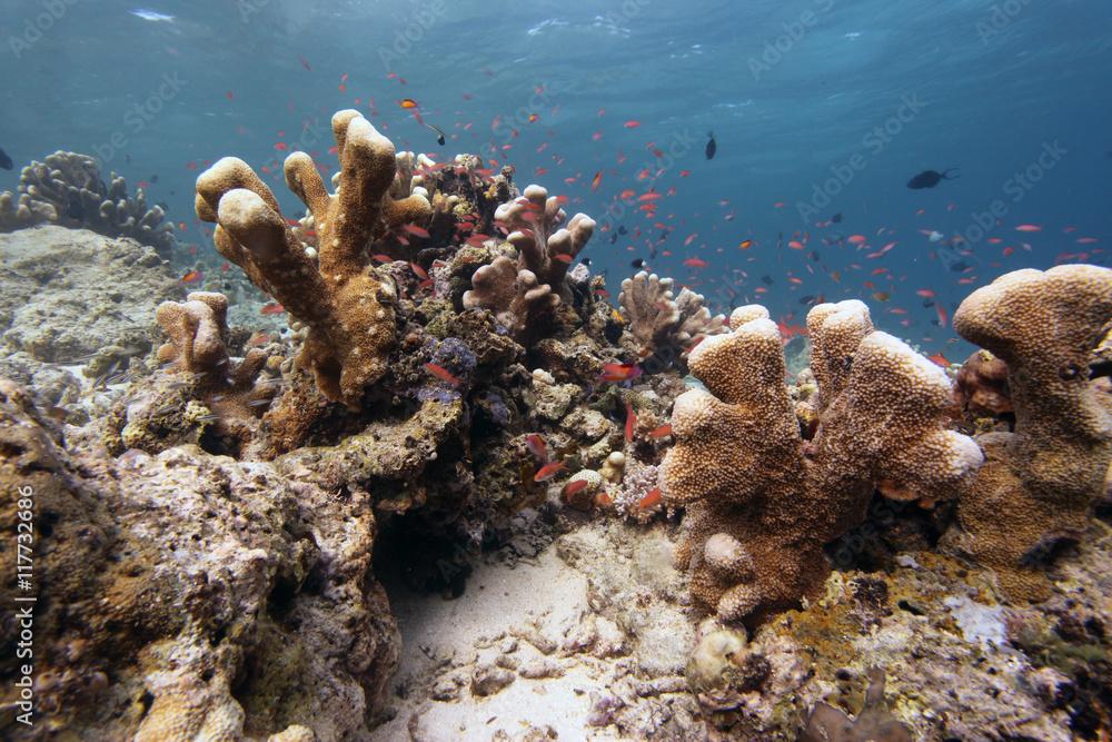 Podwodny świat Rafa Koralowa Zamów Fototapetę Plakat