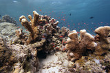 Fototapeta Fototapety do akwarium - podwodny świat - rafa koralowa