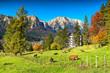 Wonderful green fields with grazing cows,Busteni,Transylvania,Romania,Europe