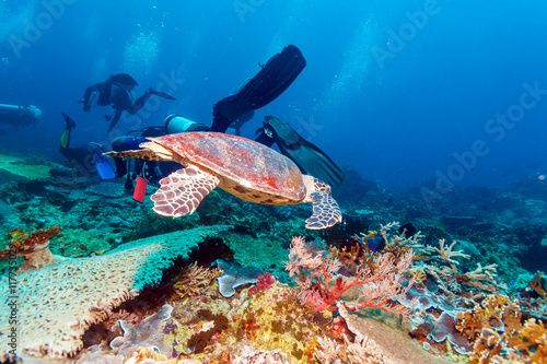 Green Sea Turtle near Coral Reef, Bali