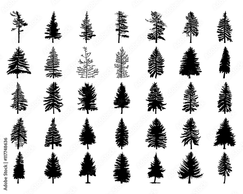 Fototapety, obrazy: Vector set silhouette of different Canadian pine trees. Conifer tree silhouettes on the white background Collection. Bundle of trees.