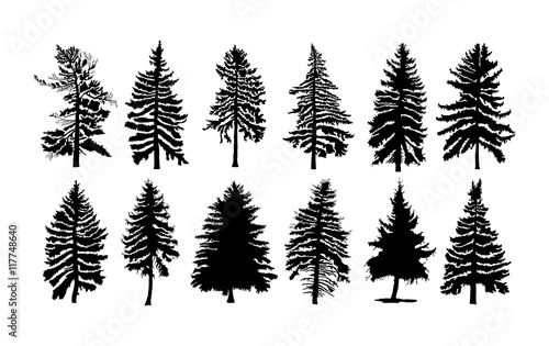 Stampa su Tela Vector set silhouette of different Canadian pine trees