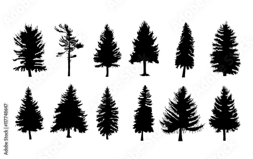 Obraz na plátně Vector set silhouette of different Canadian pine trees