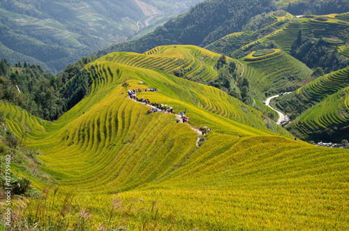 Stickers pour porte Guilin Longji Rice Terrace Fields